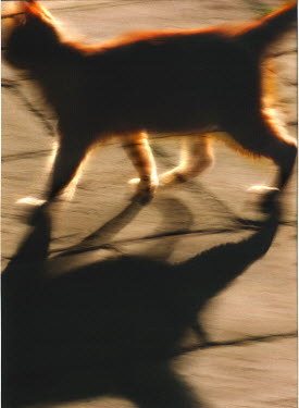 Rachel Lever CAT ON SIDEWALK Animals
