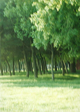 Rachel Lever FIELD WITH TREES Trees/Forest