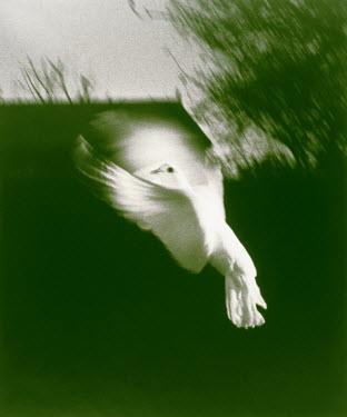 Nikki Gibbs Birds