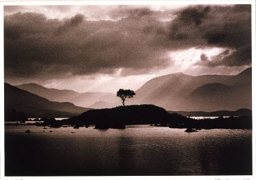 Eddie Ephraums LONE TREE ON ISLAND ON LAKE Lakes/Rivers