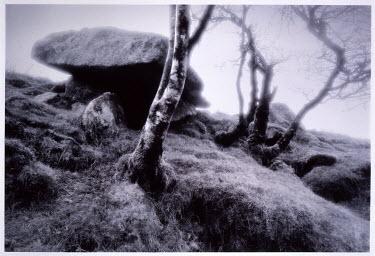 Eddie Ephraums BOULDERS ON HILLTOP Trees/Forest