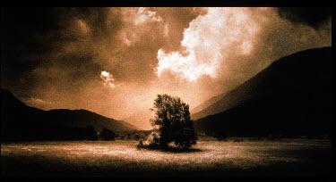Eddie Ephraums LONE TREE IN FIELD Trees/Forest