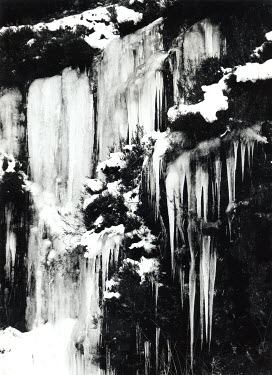 Michael Trevillion STALACTITES ON BUSHES AND STONE Snow/ Ice