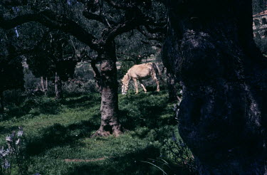 Bruce Chatwin HORSE IN FIELD WITH TREES Animals