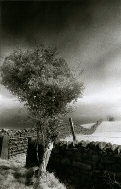 Michael Trevillion THREE BY STONE FENCE WALL Fields