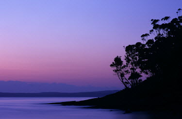 Guillaume Simioni TREES IN SILHOUETTE BY SEA Seascapes/Beaches