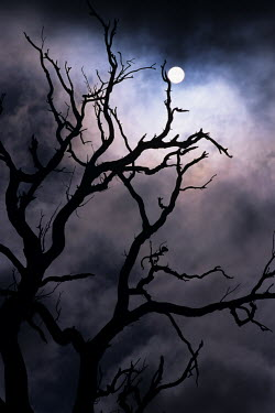 Guillaume Simioni SPOOKY TREE AT NIGHT Trees/Forest
