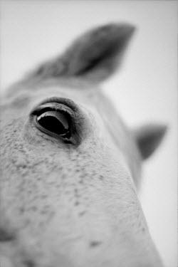 Lindsey Hopkinson Animals