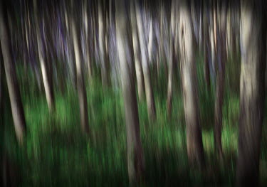 Suzanne Goodwin Trees/Forest