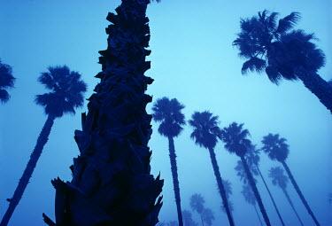 Joshua Sheldon SILHOUETTE OF PALM TREES Trees/Forest