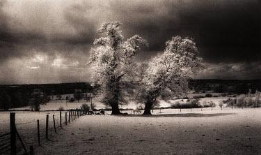Chris Reeve TREES IN FIELD Fields