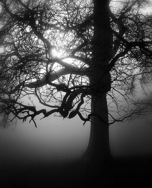 Michael Shepherd Trees/Forest