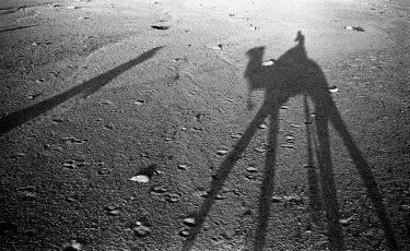 Colin Hutton SHADOW OF CAMEL ON DESERT SAND Animals