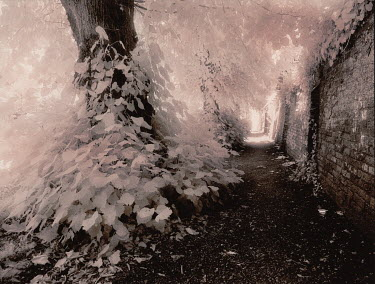 Kathy Harcom PATH ALONG STONE WALL Trees/Forest