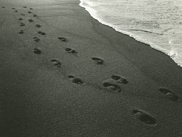 Kathy Harcom FOOTPRINTS ON BEACH Seascapes/Beaches