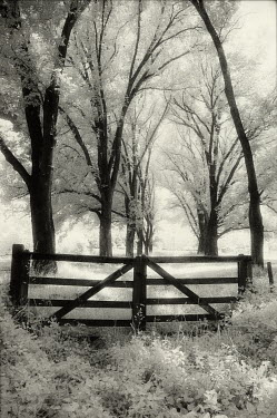 Kathy Harcom WODEN GATE IN FIELD Gates