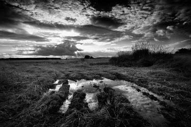 Paul Webster Fields