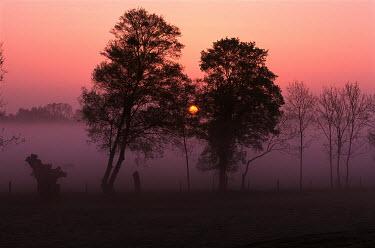 Chris Warren Trees/Forest