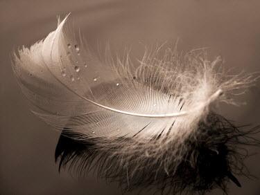 Ilona Wellmann FEATHER Birds