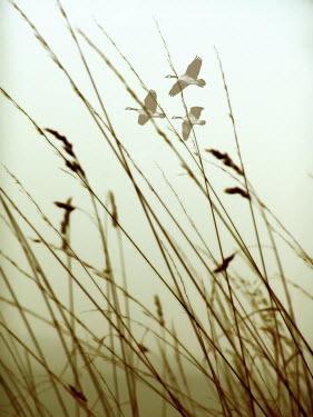 Ilona Wellmann BIRDS FLYING OVER LONG GRASS FIELD Birds