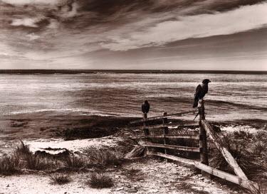 Gary Latham Birds