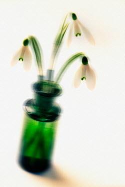 Paul Knight BOTTLE OF FLOWERS Flowers/Plants