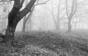 Martin Yeates Trees/Forest