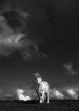 Gerard Keenan Animals