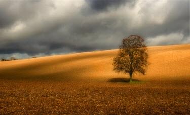 Jim Turner Trees/Forest