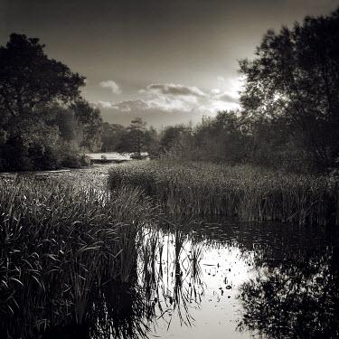David McCormack MARSH STREAM WITH LONG GRASS Lakes/Rivers