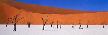 Lee Frost PETRIFIED TREES IN DESERT Desert