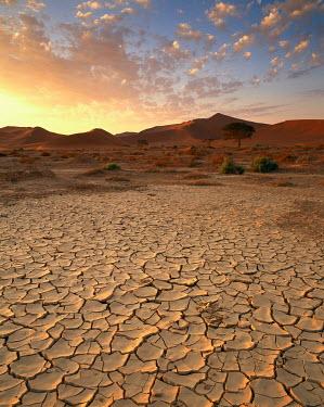 Lee Frost Desert