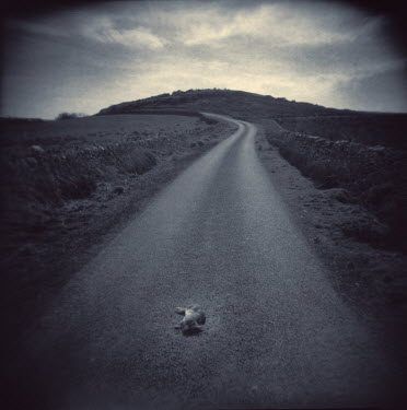 Andrew Sanderson COUNTRY ROAD WITH DEAD RABBIT Roads