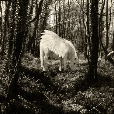 Clayton Bastiani WINGED HORSE IN FOREST Animals
