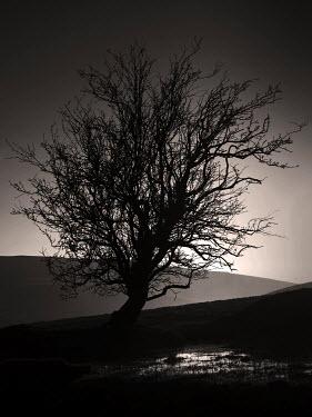 Mari Owen Trees/Forest