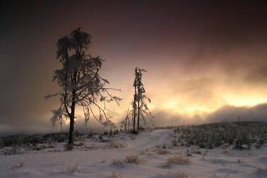 Michal Affanasowicz Snow/ Ice