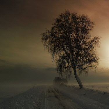 Marcin Bublewicz COUNTRY PATH IN WINTER Paths/Tracks