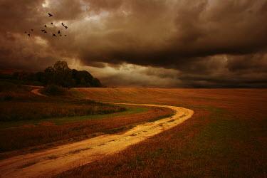 Marcin Bublewicz DIRT PATH THROUGH FIELD Paths/Tracks