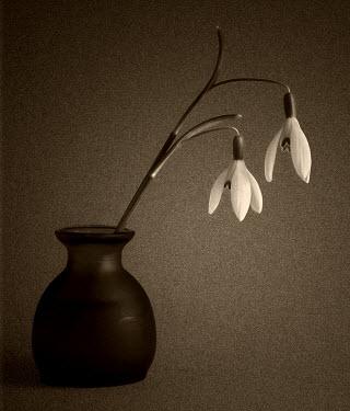 Maggie Brodie FLOWERS DROOPING IN POT Flowers/Plants