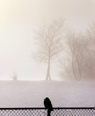 Edward Jones BLACKBIRD IN WINTER Birds