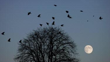 Edward Jones BIRDS FLYING AROUND TREE Trees/Forest