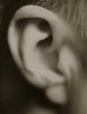 Evans & Robinson CHILD'S EAR Body Detail