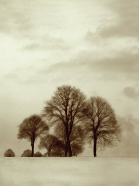 Ilona Wellmann TREES IN FIELD Snow/ Ice