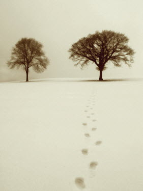 Ilona Wellmann FOOTPRINTS IN SNOW Snow/ Ice