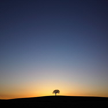 Steve Gosling SILHOUETTE OF TREE ON HILL Trees/Forest