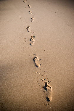 Claire Morgan FOOTPRINTS ON BEACH Desert