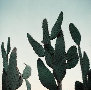 Jessica Hilltout CACTUS PLANTS BENEATH BLUE SKY Flowers/Plants