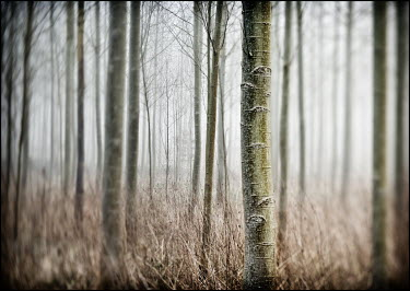 Mark Sadlier FROSTY TREES Trees/Forest