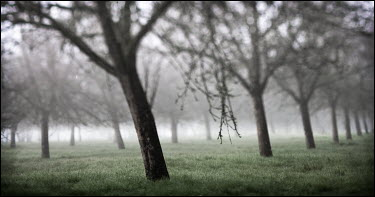 Mark Sadlier TREES IN MIST Trees/Forest