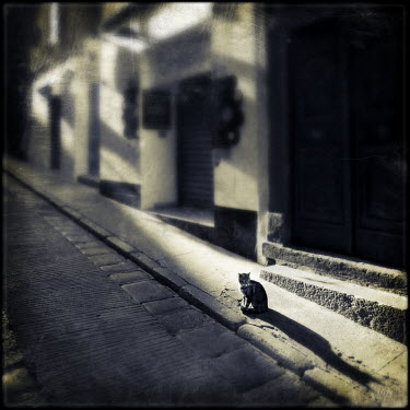 Mark Sadlier CAT ON CITY STREET Streets/Alleys